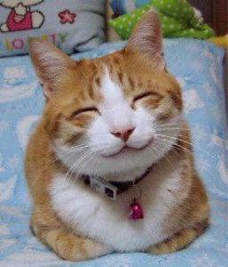 Smug cat on Pannellbytes forgiveness blog post