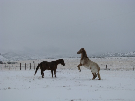 Horses, snow, Tag & Duchess, pannellbytes, Duane Pannell, mountains, Redneck Russian