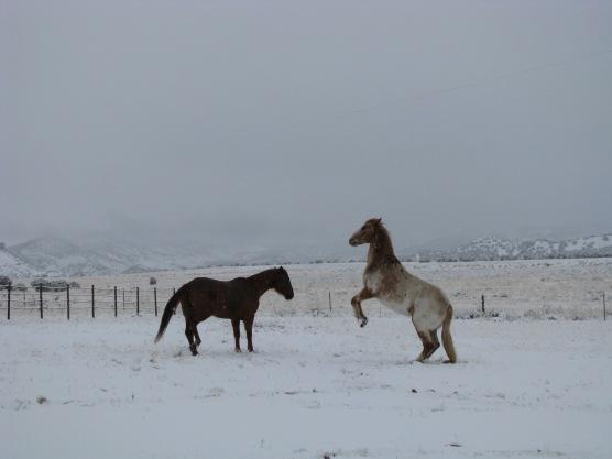 Horses, snow, Tag & Duchess, pannellbytes, Duane Pannell, mountains, Redneck Russian